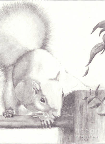 Drawing - The Squirrel Sees Me by Linda Anderson
