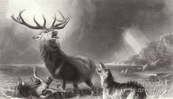 Antlers Drawing - The Stag At Bay by Edwin Landseer
