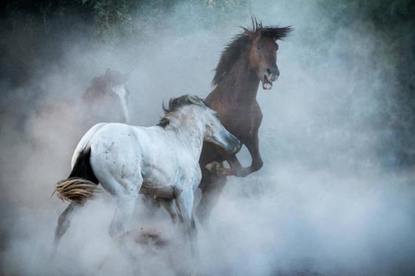 Wall Art - Photograph - The Stallion Dance  by Saija Lehtonen