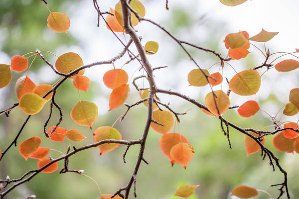 Wall Art - Photograph - The Start Of Fall by Az Jackson