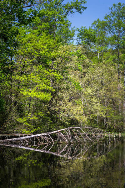 Photograph - The Stillness Of The Lake by Debra and Dave Vanderlaan