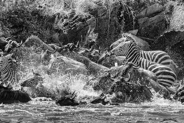 Photograph - The Struggle by Mark Hunter