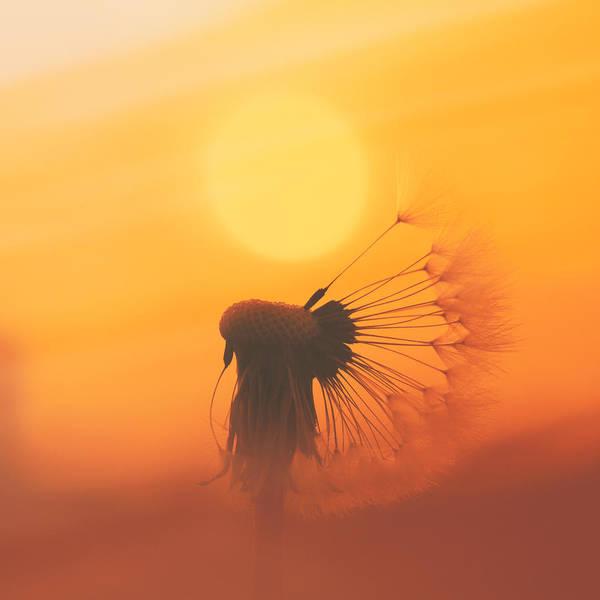 Photograph - The Sun by Jaroslav Buna