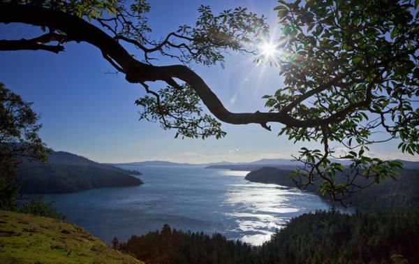 Vancouver Island Photograph - The Sun Rises Over An Arbutus Tree by Debra Brash / Design Pics
