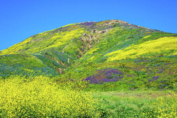 Photograph - The Superbloom Hits The Malibu Hills by Lynn Bauer