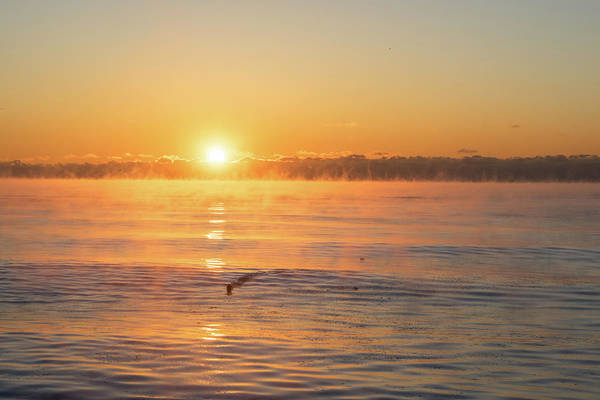 Photograph - The Surfing Duck - Smoke On The Water Sunrise by Georgia Mizuleva