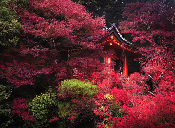 Photograph - The Temple In The Woods by Matt Shiffler