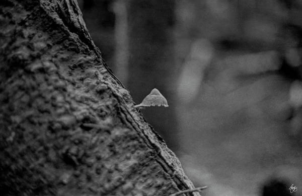 Photograph - The Tiny Mushroom by Wayne King