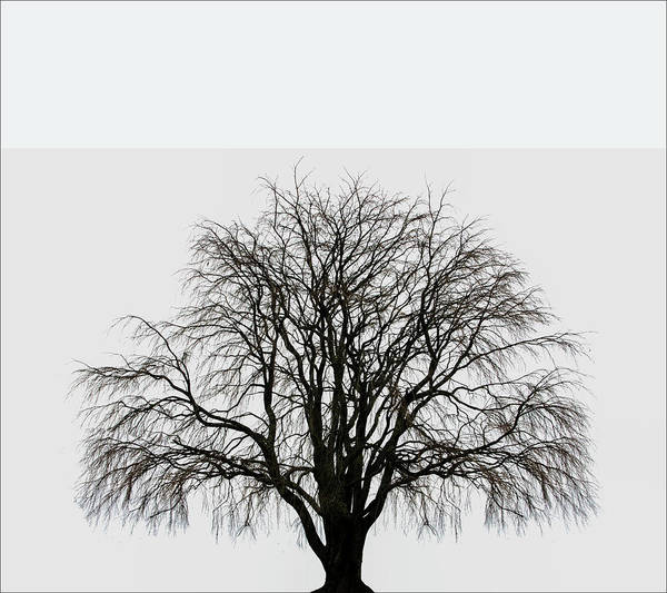 Photograph - The Tree By The Side Of The Road by Jim Dollar