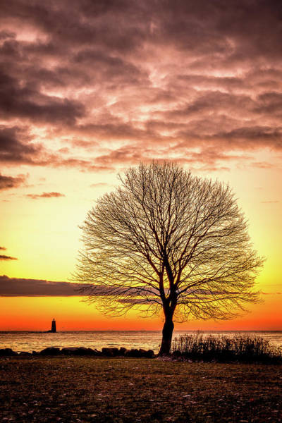 Photograph - The Tree by Jeff Sinon