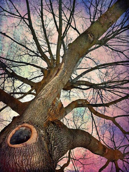 Photograph - The Tree Of Many Limbs by Tara Turner