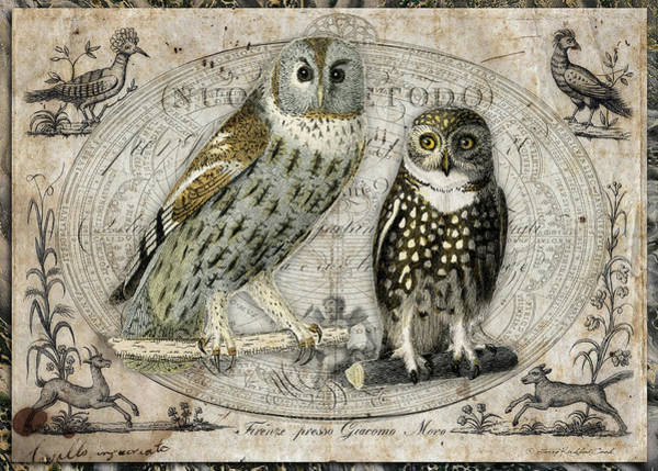 Digital Art - The Two Hoots by Terry Kirkland Cook