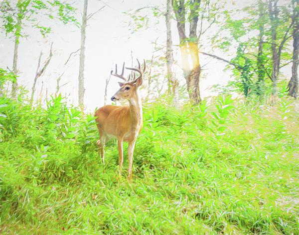 Photograph - The Velvet Buck by Lara Ellis