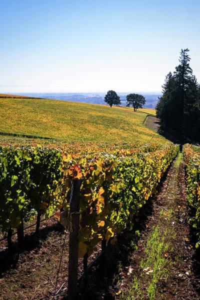 Photograph - The Vineyard by Steven Clark