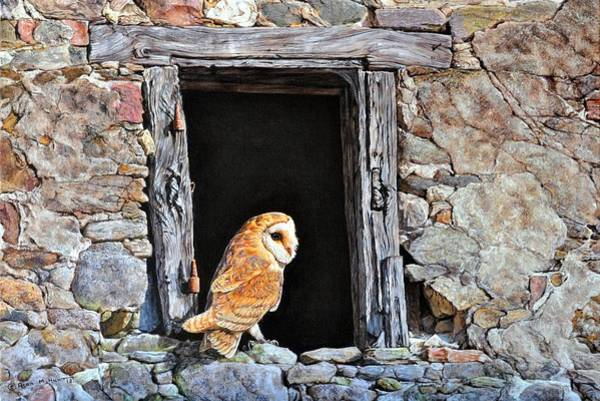 Painting - The Visitor - Barn Owl By Alan M Hunt by Alan M Hunt