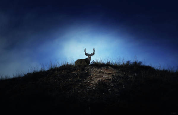 Wall Art - Photograph - The Visitor  by Brian Gustafson