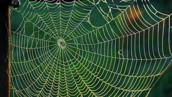 Photograph - The Web by Bryan Smith