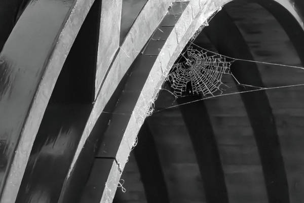 Photograph - The Web by Silvia Marcoschamer