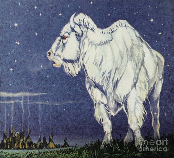 Wall Art - Painting - The White Buffalo by Angus McBride