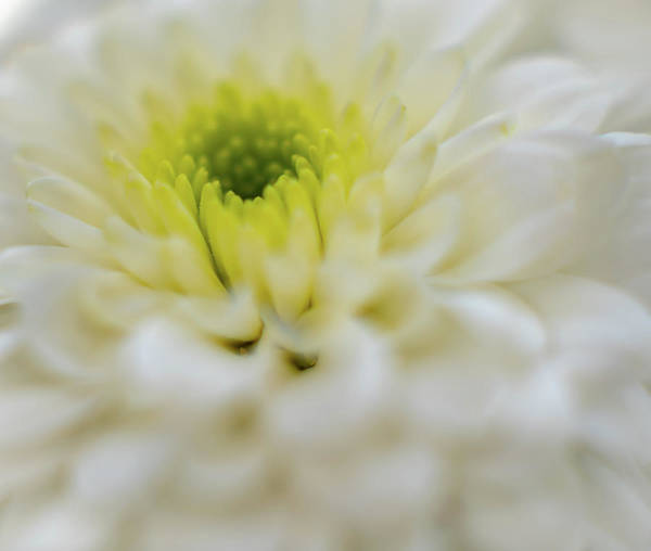 Photograph - The White Flower by Francisco Gomez