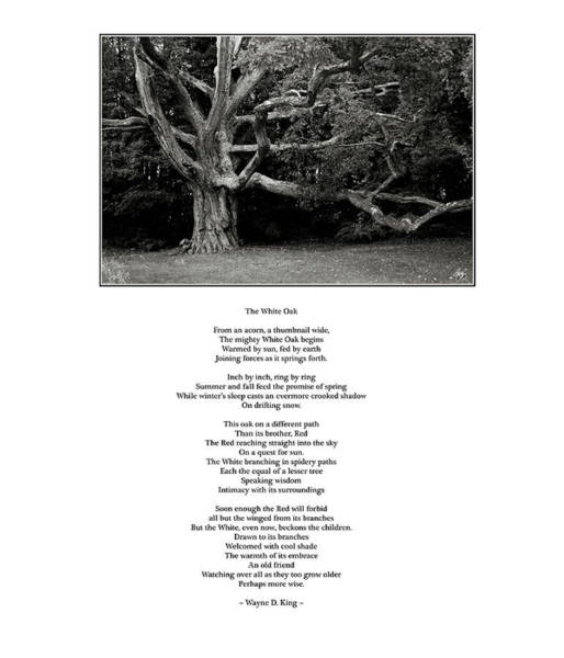 Photograph - The White Oak Poem by Wayne King