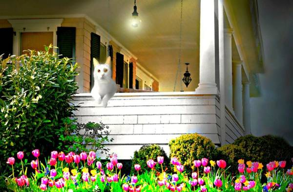 Wall Art - Photograph - Wrap Around Cat by Diana Angstadt
