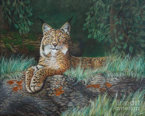 Painting - The Wild Cat  by Bob Williams