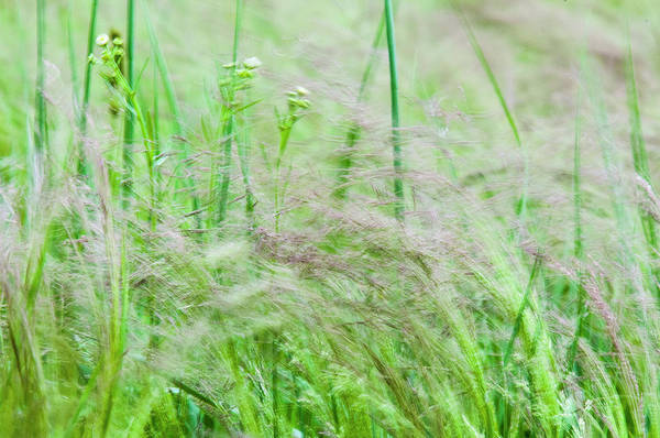Photograph - The Wind In The Grass by Robert Potts