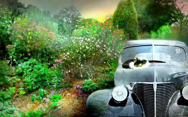 Wall Art - Photograph - The Windshield Wiper by Diana Angstadt