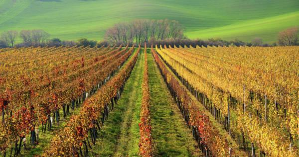 Photograph - The Wine Line by Vlad Sokolovsky