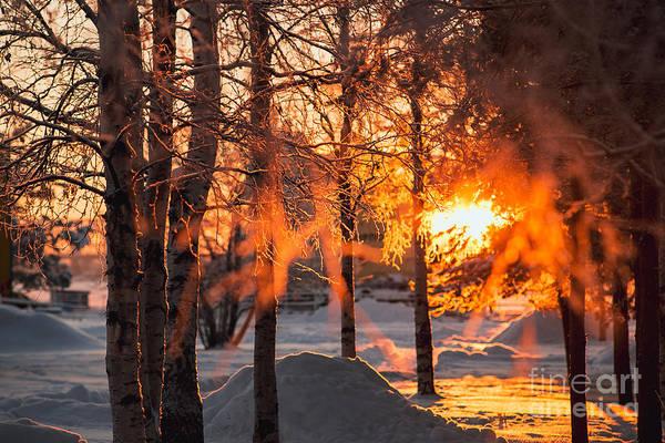 Hoarfrost Wall Art - Photograph - The Winter Park At Sunset. Hoarfrost On by Sergey Zaykov