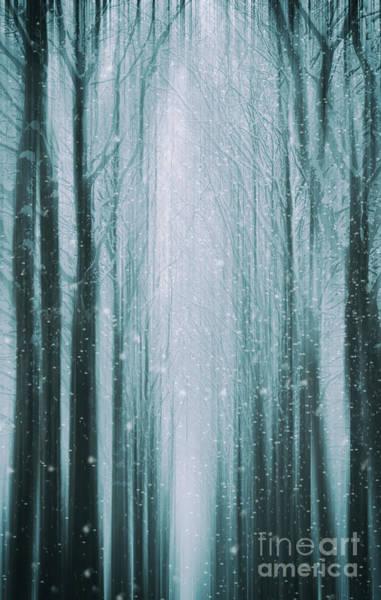 Photograph - The Winter Wood by David Lichtneker