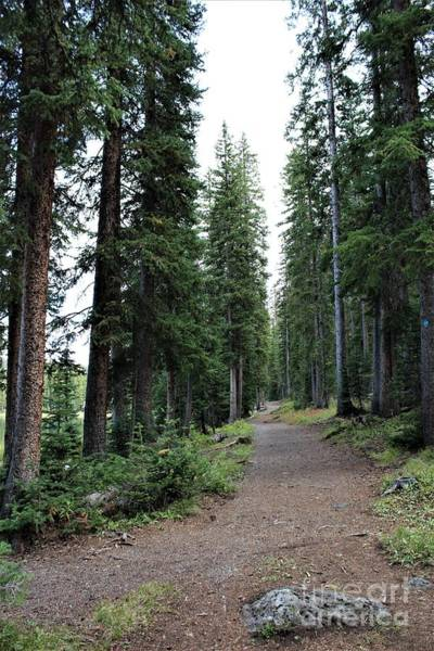 Photograph - The Wooded Path by Tammie J Jordan