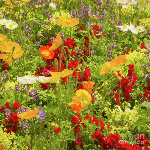 Photograph - The World Laughs In Flowers - Poppies by Marilyn Cornwell