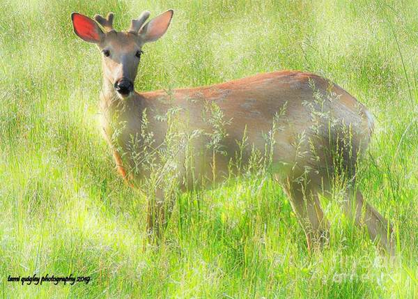 Photograph - The Yearling by Tami Quigley