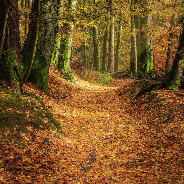 Art Print featuring the photograph The Yellow Leaf Road by Elliott Coleman
