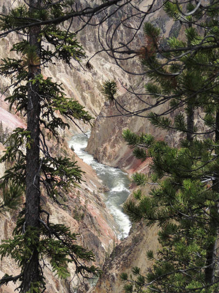 Digital Art - The Yellowstone River Seen Through The Pines by Jayne Wilson