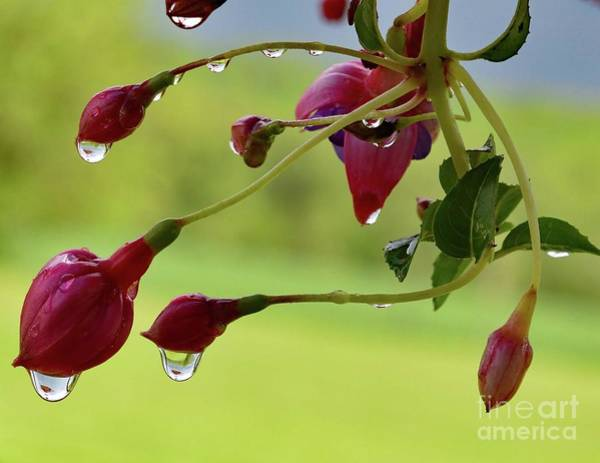 Wall Art - Photograph - There's An Oriole Feeder Hidden Inside The Water Droplets by Cindy Treger