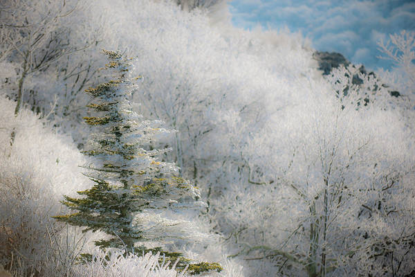 Photograph - Thick Hoarfrost by Mark Duehmig