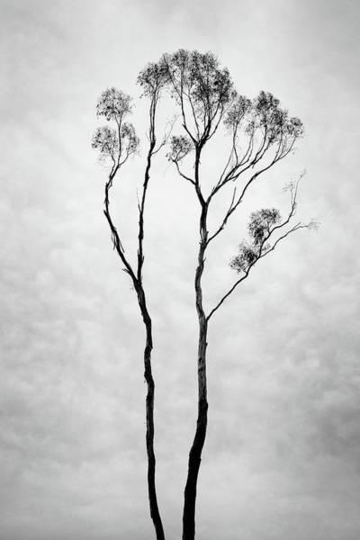 Wall Art - Photograph - Thin by Joseph Smith