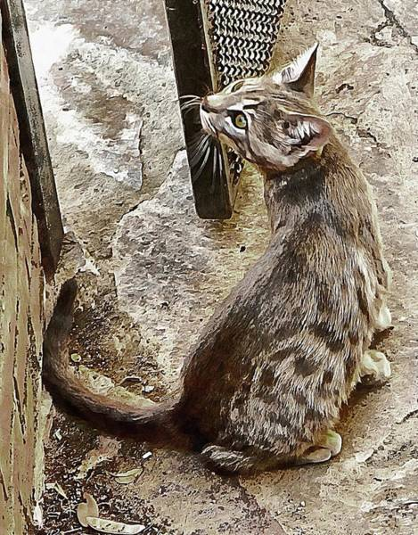 Photograph - Thinking Kitten Stuff by Dorothy Berry-Lound