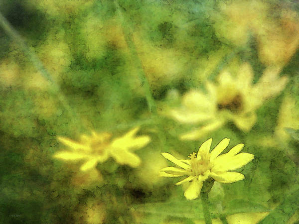 Photograph - Thinking Of Yellow 4620 Idp_2 by Steven Ward