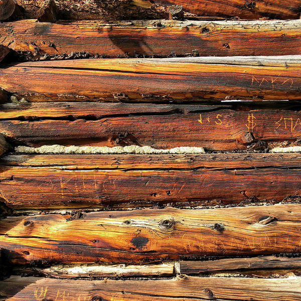 Wall Art - Photograph - This Old Wood by Eric Glaser