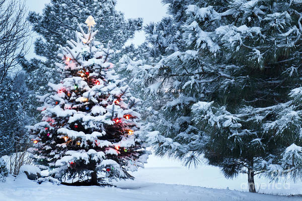 Wall Art - Photograph - This Snow Covered Christmas Tree Stands by Ricardo Reitmeyer