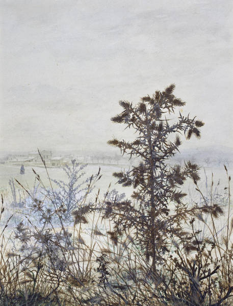 Weeds Drawing - Thistles And Weeds by Leon Bonvin