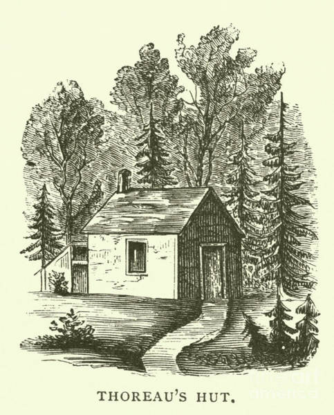 Wall Art - Drawing - Thoreau's Hut, Walden Woods, Concord, Massachusetts by American School