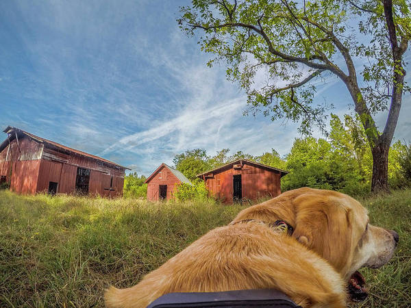 Photograph - Thornburg Barns By Photo Dog Jackson by Matthew Irvin