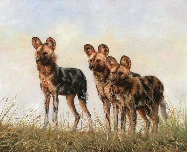 Painting - Three African Wild Dogs by David Stribbling