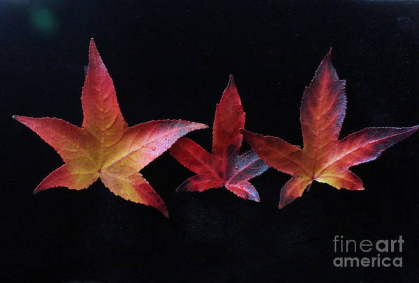 Photograph - Three Amigos Or Amigas by Marie Neder