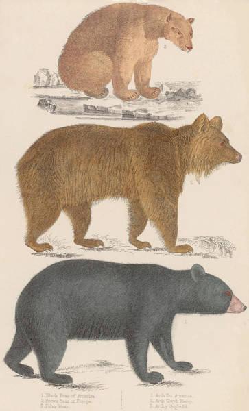 Archival Digital Art - Three Bears by Hulton Archive